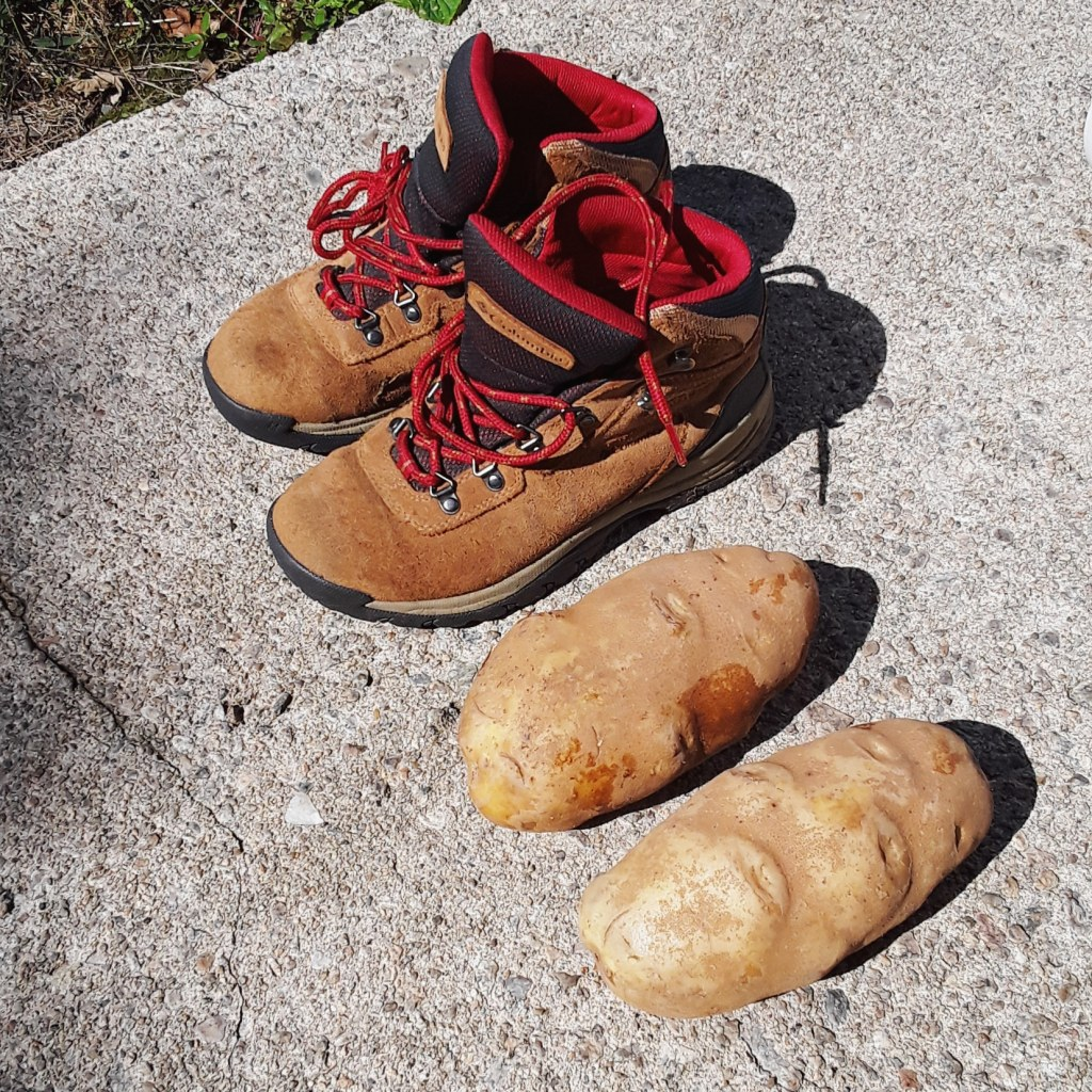 pair of boots next to two large potatoes